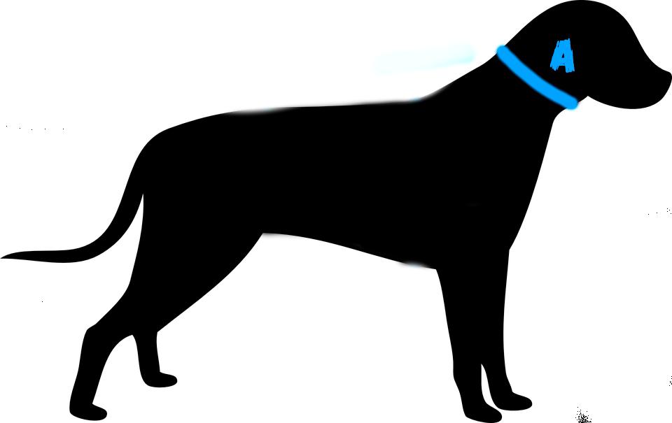 Collares para perros. Medida de collares para perros. Como tomar medidas de los collares para perro.